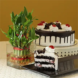 Cake With  Bamboo