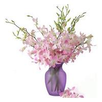 Mistine Dendrobium Orchids
