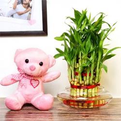 2 Layer Bamboo Exuberance